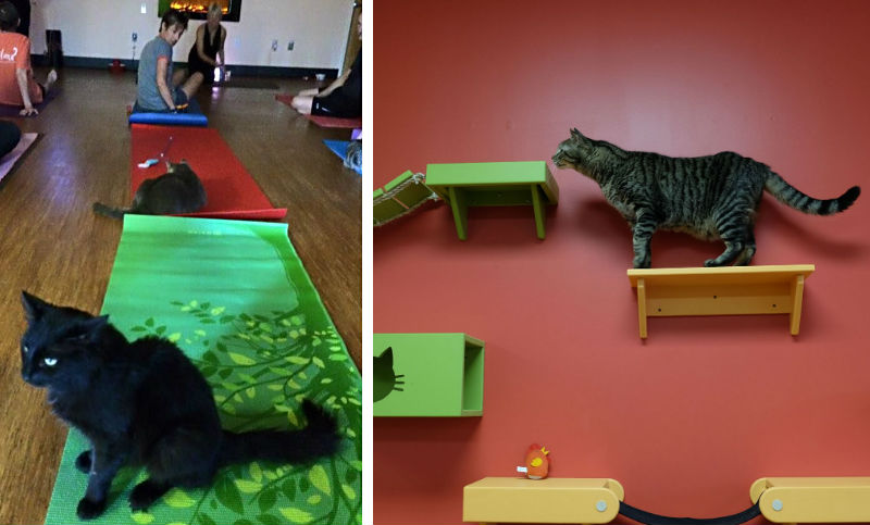 Tiny Lions lounge and adoption center