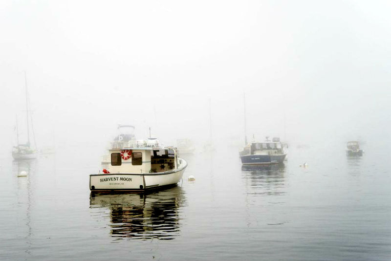 Beutler's photo Fogged In